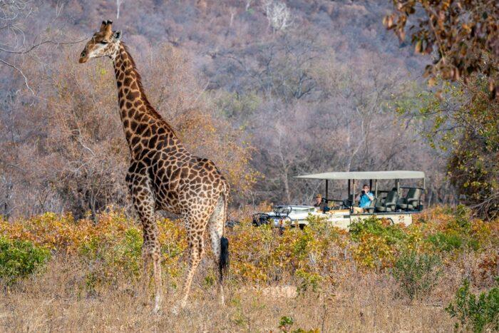 Lepogo Lapalala Safari